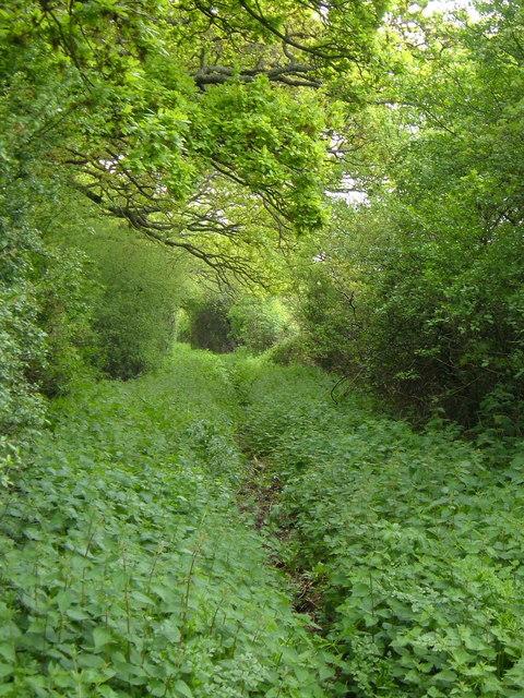 Hatch Green Lane
