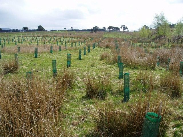 New woodland, South Lanarkshire