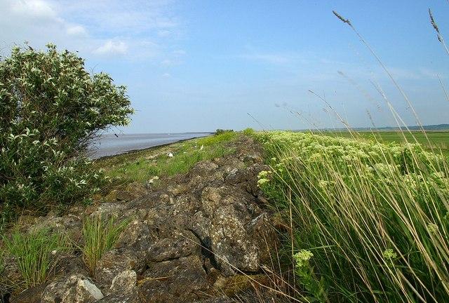 Buddleia  & Sea Wall