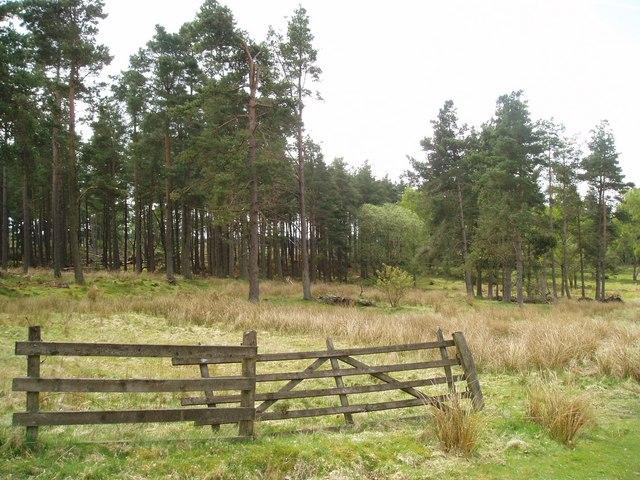 Woodland near Newbigging