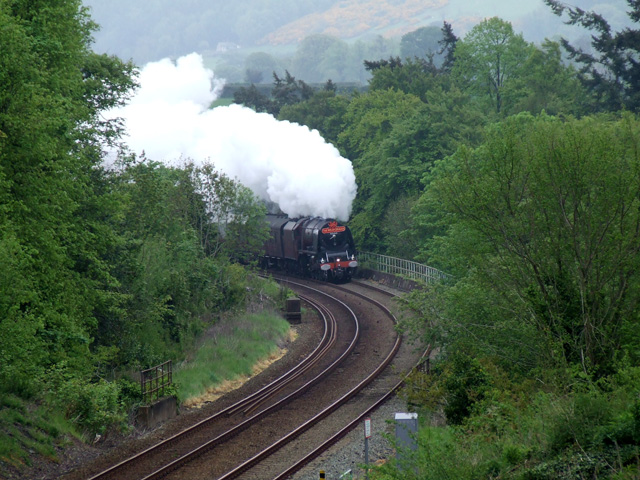 Steam train in tree lined cutting