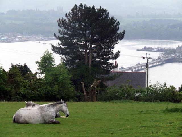 Horses in a field, overlooking Bangor pier