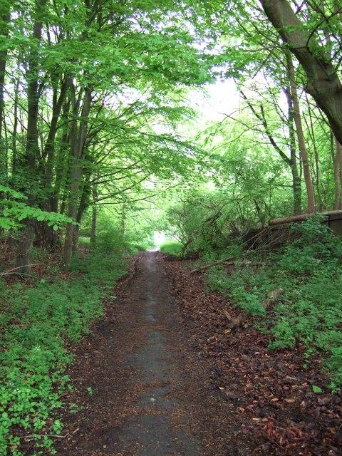 Track through the woods, Halton