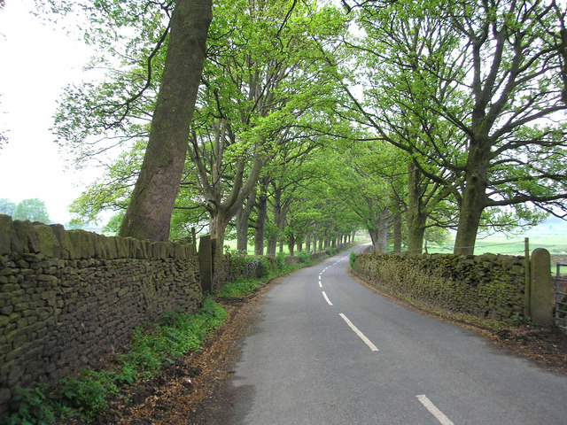 Avenue of beeches, Pale Lane, Carleton-in-Craven, Yorkshire
