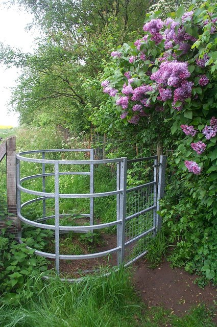 Gate and lilac tree
