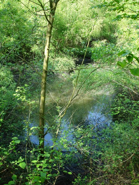 Pool in Putt Wood