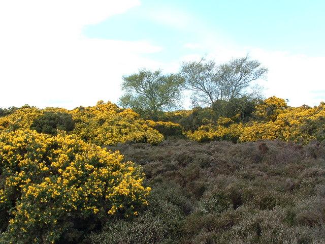 Kempstone Hill