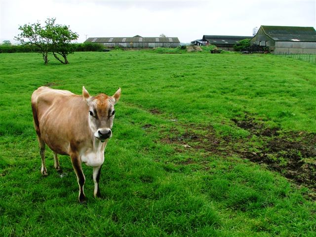 Low Moor Farm