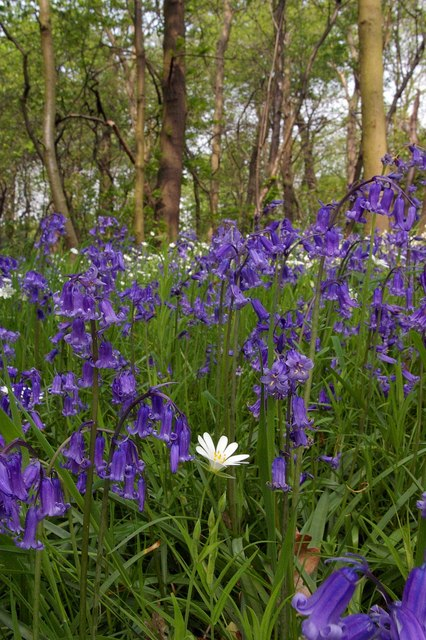Of Course I�m A Bluebell!