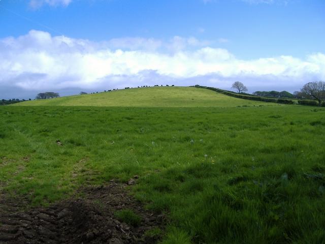Rich pasture at Billown
