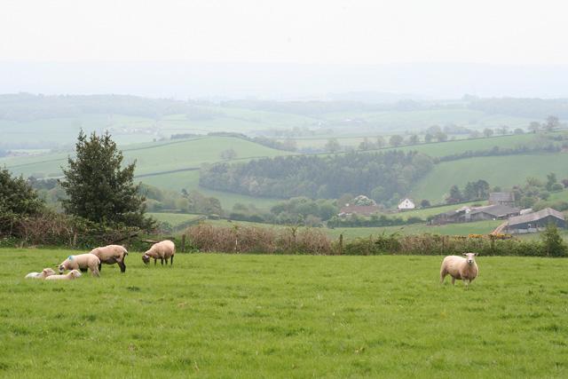 Wiveliscombe: towards Withycombe Farm