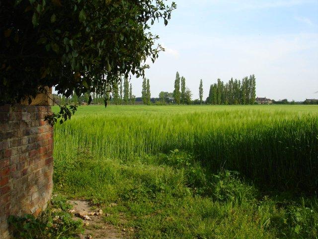 Barley at Nouds