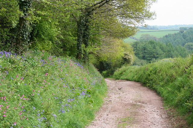 Skilgate: bridleway from Haddon End
