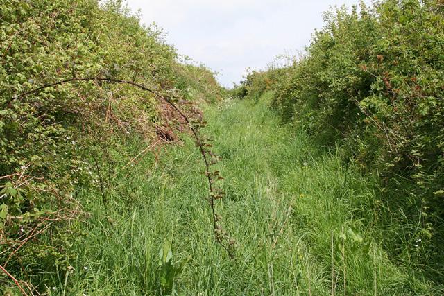 Bampton: old track between fields