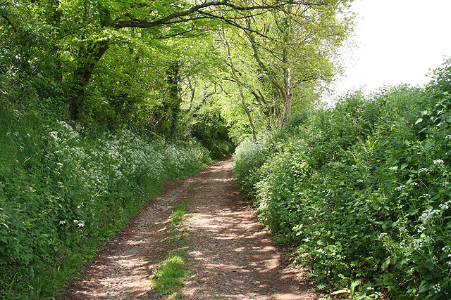 Holcombe Rogus: track near Kytton Barton