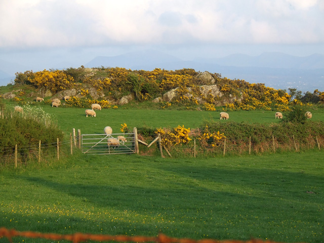 Grazing land near to Newborough Forest