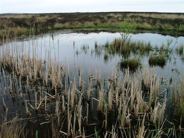 Unmapped Pond, Easington High Moor