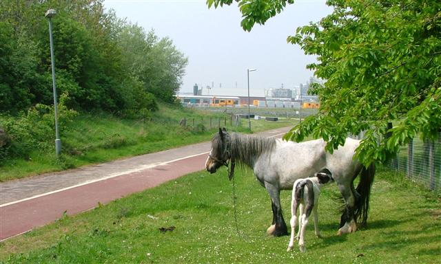 Grazing for Travellers' Horses, Riverside Park