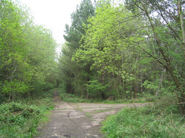 Western part of Morkery Wood