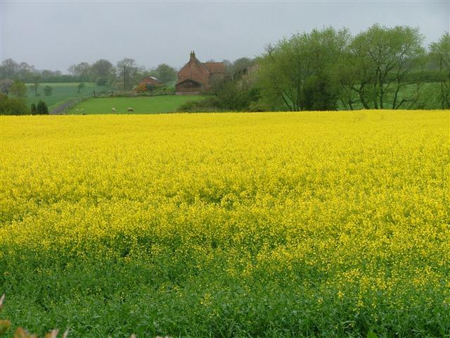 Stobthorn Farm