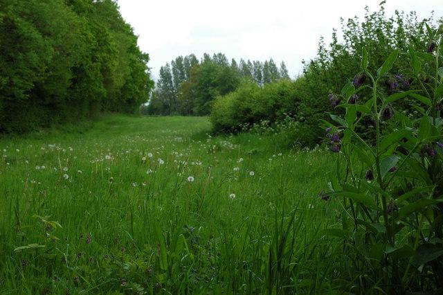 Field in front of Reynold's Hanger