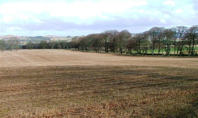 Stubble Field, Callaly Deer Park