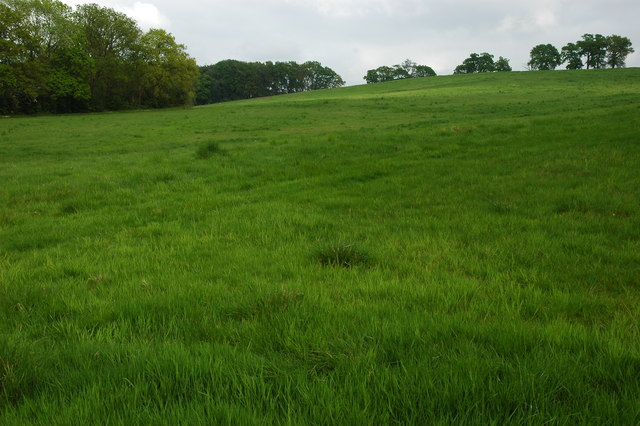 The meadow land before you reach Hallsgrove copse