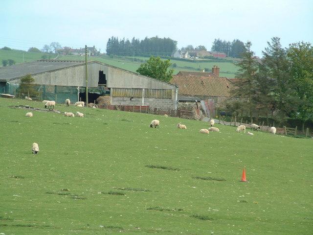 Ring Farm