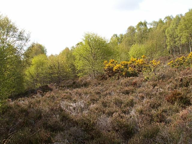 Woodland by Clachan