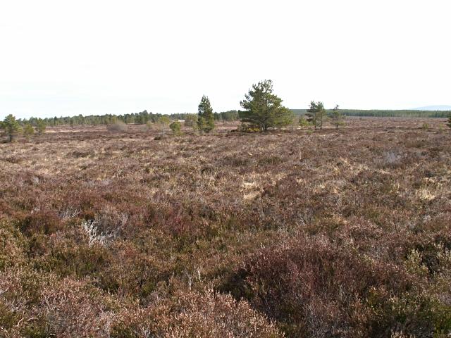 Moorland near Carr Ban