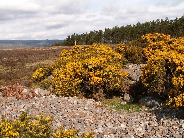 Druimashie Moor