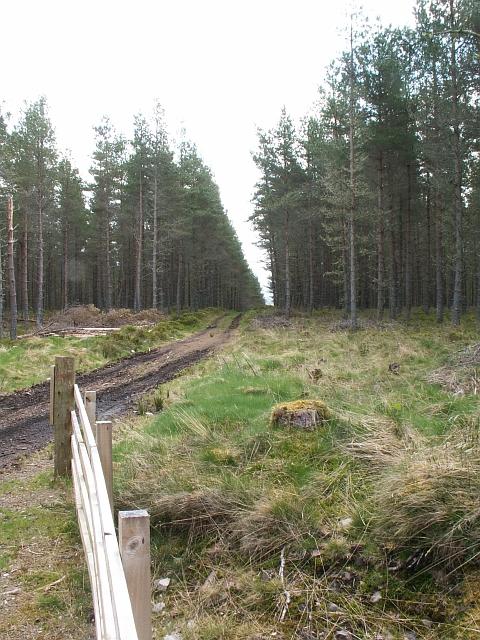 Forest track by Loch Ashie