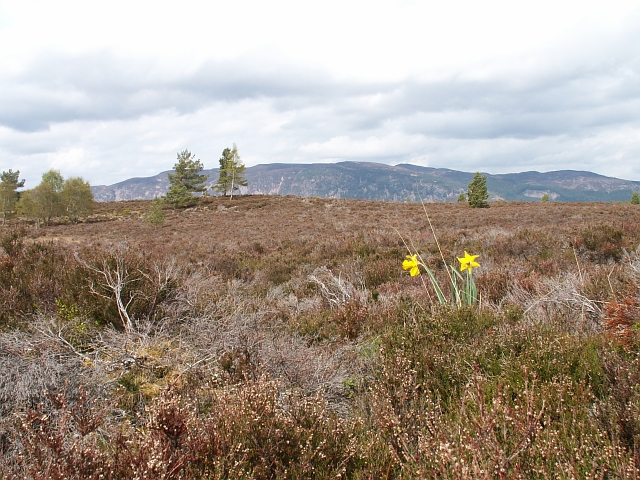 Moorland by old Clune Wood