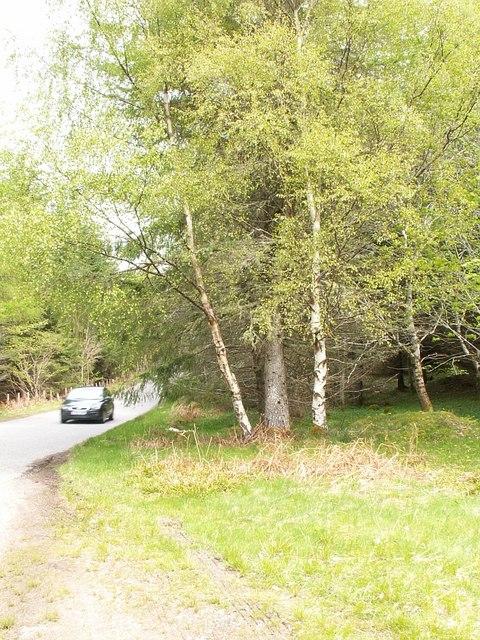 Woodland by Boleskine