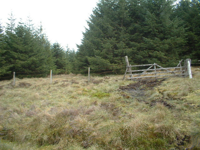 Old gate and firebreak into the forest