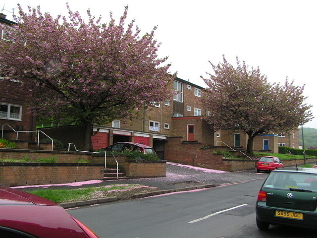 Trees in Blossom with flats behind
