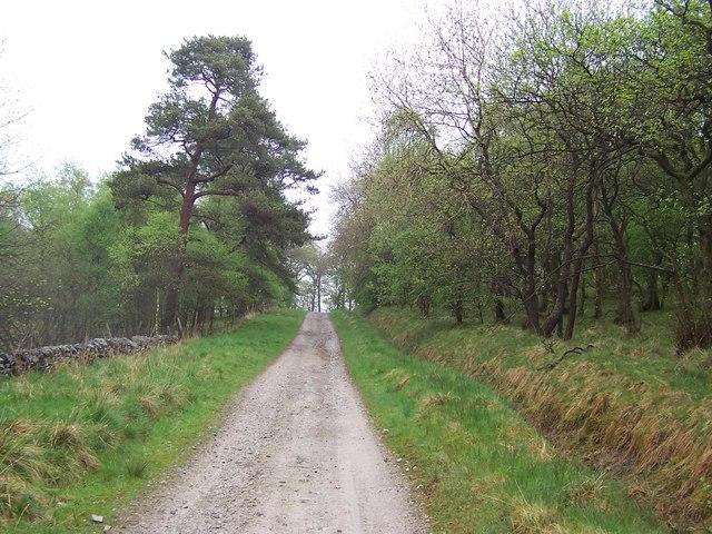 Dacre Lane in Wenningber Plantation