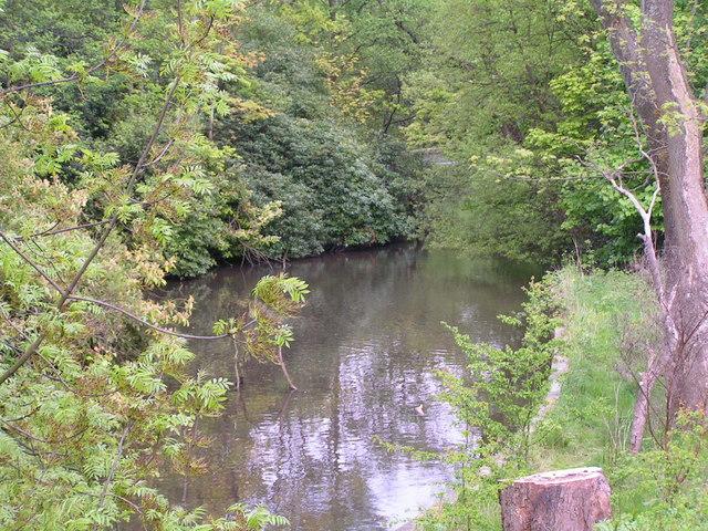 Overgrown pond / lake, Endcliffe Park