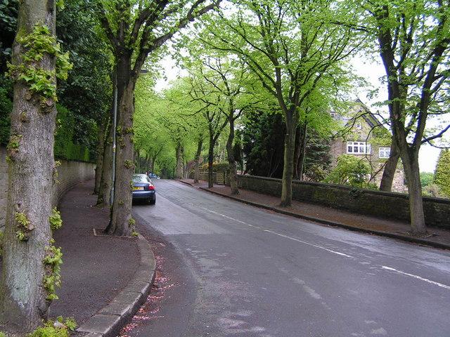 Leafy suburban street