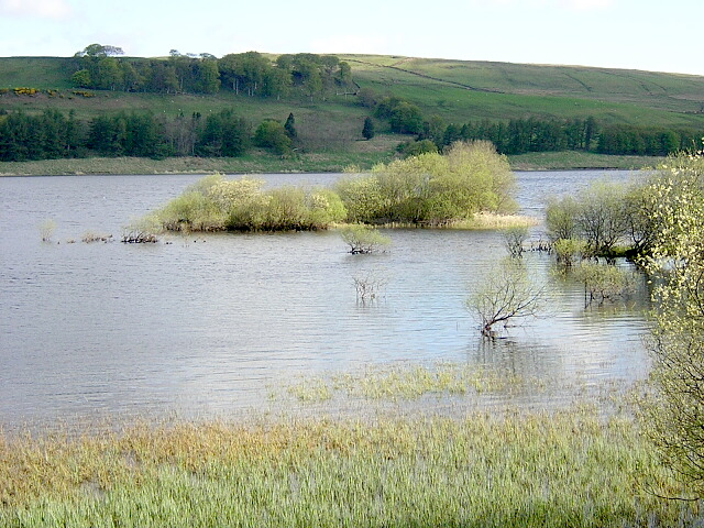 Small Island in Carron Valley Reservoir