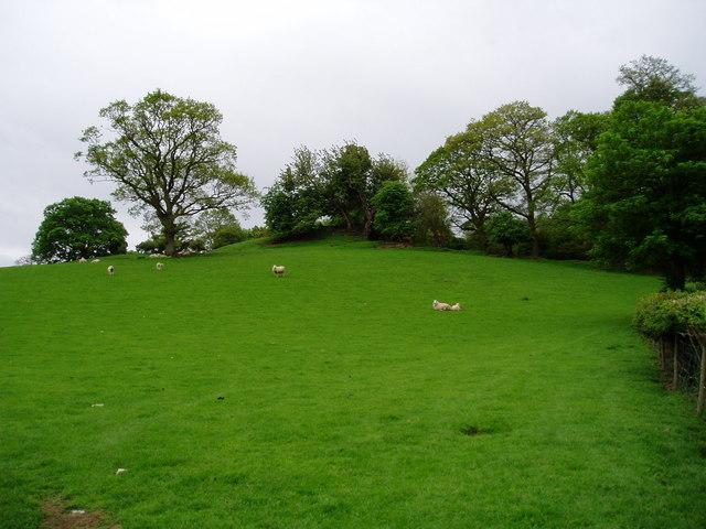 Field near Bylan, Llanelidan