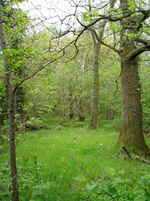 Woodland, Llanelidan