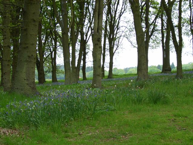 Woodland at Turner's Green