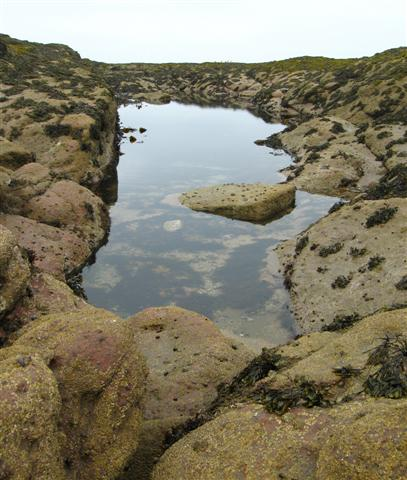Rock Pool, St. Baldred's Boat, Seacliff