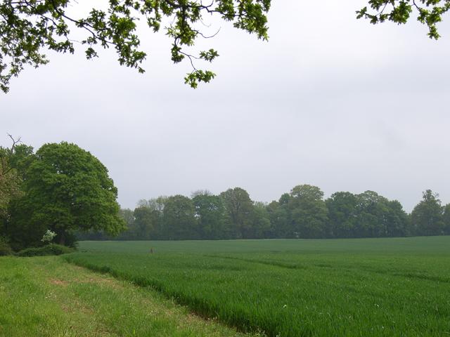 Farmland near Mill Lane