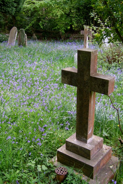 Bluebells in St Nicholas' churchyard, Brockenhurst