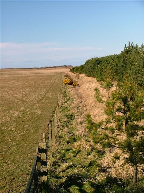 Field/Plantation Boundary, Togston Links