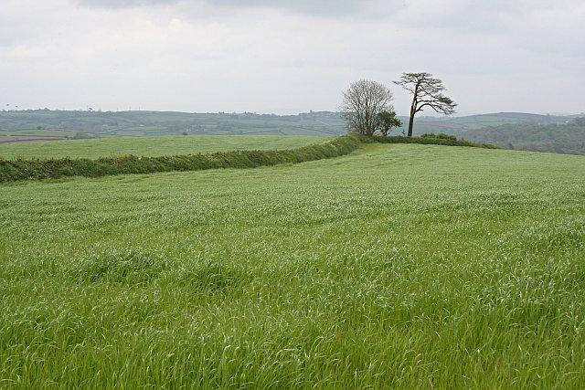 Fields of Spring Grain