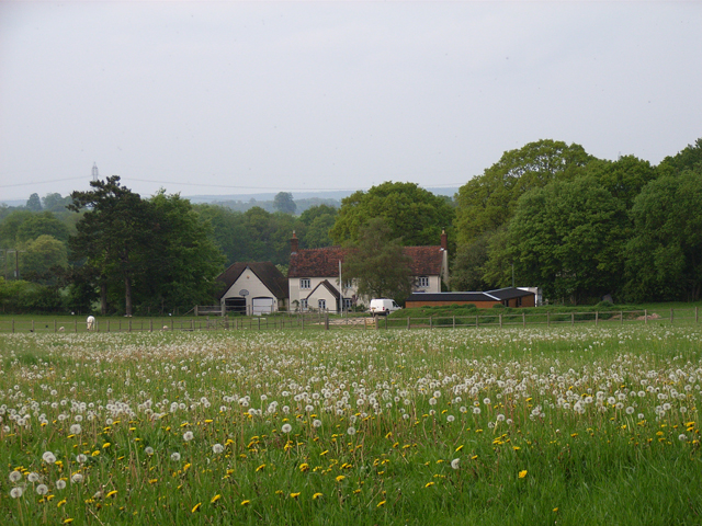 Buttnidge Cottage and dandelions