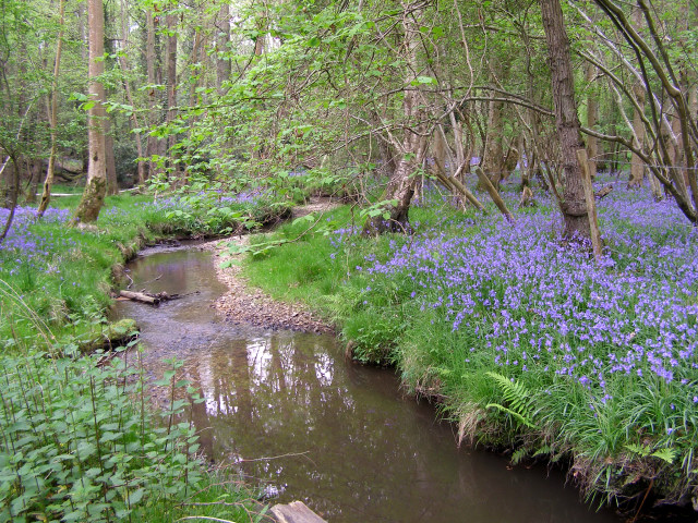 Stream through bluebell woods at Moor Corner, New Forest